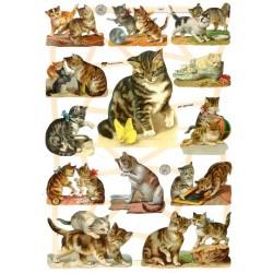 Cromos alemanes gatos 16,5...